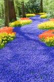 fältet blommar fjädern Arkivbild