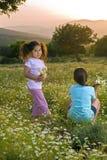 fältet blommar flickasolnedgång två Arkivfoto