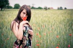 fältet blommar flickavallmon Arkivbilder