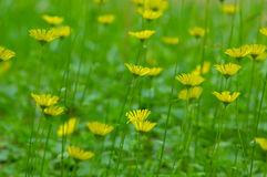 fältet blommar green Royaltyfri Bild