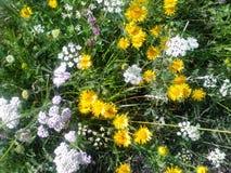 Fältet blommar lösa blommor arkivbilder