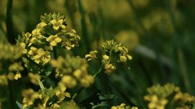 fältet blommar makrofjäderyellow Royaltyfria Foton