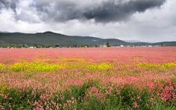 fältet blommar pink Arkivfoton