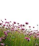 fältet blommar pink Arkivbild