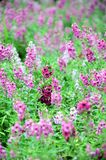 fältet blommar purple Fotografering för Bildbyråer