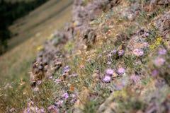 fältet blommar purple Royaltyfria Bilder