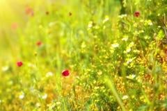 fältet blommar sommar Arkivbilder