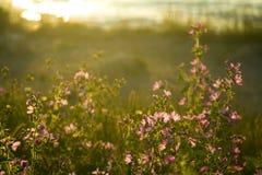 fältet blommar sommar Arkivfoton