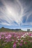 fältet blommar wild Arkivbild