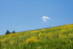 fältet blommar yellow Royaltyfria Bilder