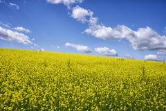 fältet blommar yellow Royaltyfria Foton
