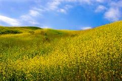 fältet blommar yellow arkivfoto