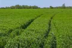 Fältet för grönt gräs Arkivfoton
