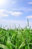 Fältet för grönt gräs och blå himmel med solen tänder Fotografering för Bildbyråer