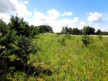 Fältet med ljusa blommor, sörjer och blå himmel Arkivbilder