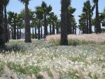Fältet med siktar i cornicheessaouira Fotografering för Bildbyråer