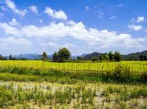 Fältet nära den Tham Xang grottan. Laos. Royaltyfri Bild