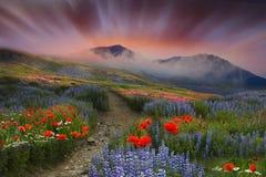 Fältet och bergen Arkivfoton