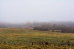Fältet och kullar med torrt gräs och avel, skogen är räkningen royaltyfria bilder