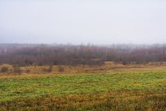 Fältet och kullar med torrt gräs och avel, skogen är räkningen arkivbild