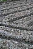 fältet plöjde rice Arkivbilder