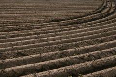 fältet planterar potatisen Royaltyfria Bilder