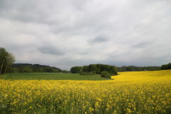 fältet våldtar Fotografering för Bildbyråer