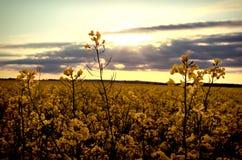 fältet våldtar solnedgång Arkivbild