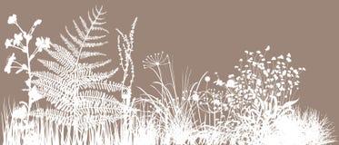 fältgräs royaltyfri illustrationer