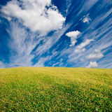fältgräs Arkivfoton