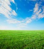 fältgräs arkivbilder