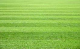 fältgräs