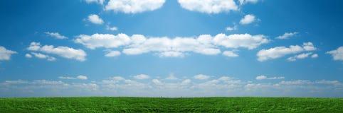 fältgräsgreen fotografering för bildbyråer