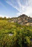 fältgreen över solnedgång Royaltyfri Bild