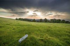 fältgreen över solnedgång Arkivfoton