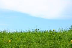 fältgreen Royaltyfri Fotografi