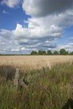 Fältlandskap i blå himmel för sommar Arkivfoton