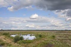 Fältlandskap i blå himmel för sommar Royaltyfri Fotografi