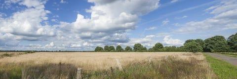 Fältlandskap i blå himmel för sommar Royaltyfri Bild