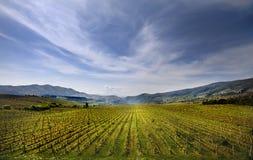 fältmacedonia vingård royaltyfria bilder