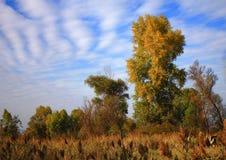 fältmeetfloder två Arkivfoto