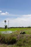 fältpaddy thailand Fotografering för Bildbyråer