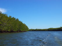FältprästRamos flod, Chinandega Royaltyfria Bilder