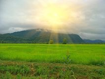 fältrice thailand royaltyfri fotografi