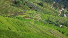 fältrice vietnam Fotografering för Bildbyråer