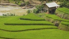 fältrice vietnam Royaltyfri Bild