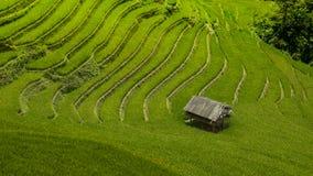 fältrice vietnam Royaltyfri Foto