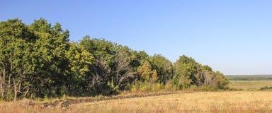 fältskog nära Royaltyfri Foto