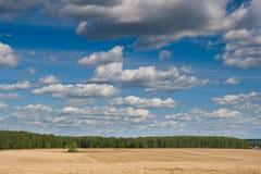 fältskoggreen nära veteyellow Royaltyfri Fotografi