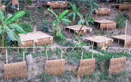 Fälttält på bambu- och bananträdet på sidan Royaltyfri Bild